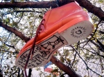 I saw a shoe hanging from a tree once. It wasn't that weird.